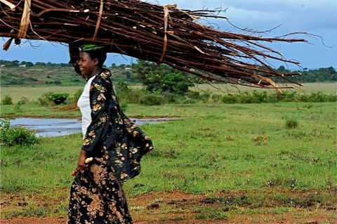 Women carrying firewood.JPG